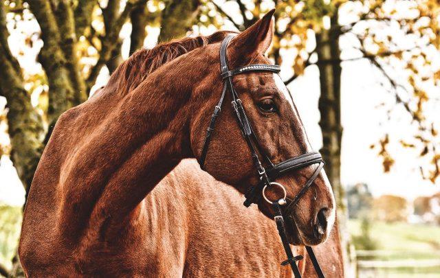 Jak dbać o zdrowie konia?