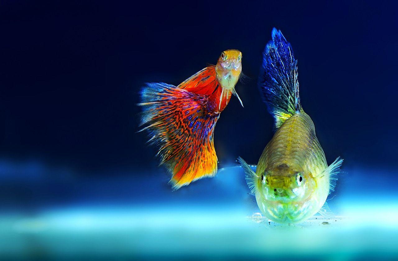 Akcesoria dla rybek – jak udekorować domowe akwarium?