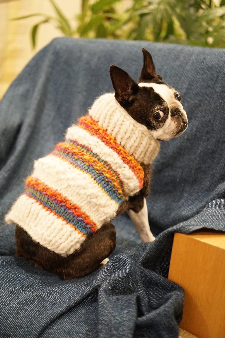 Dlaczego pies powinien mieć ubranko na zimne dni?