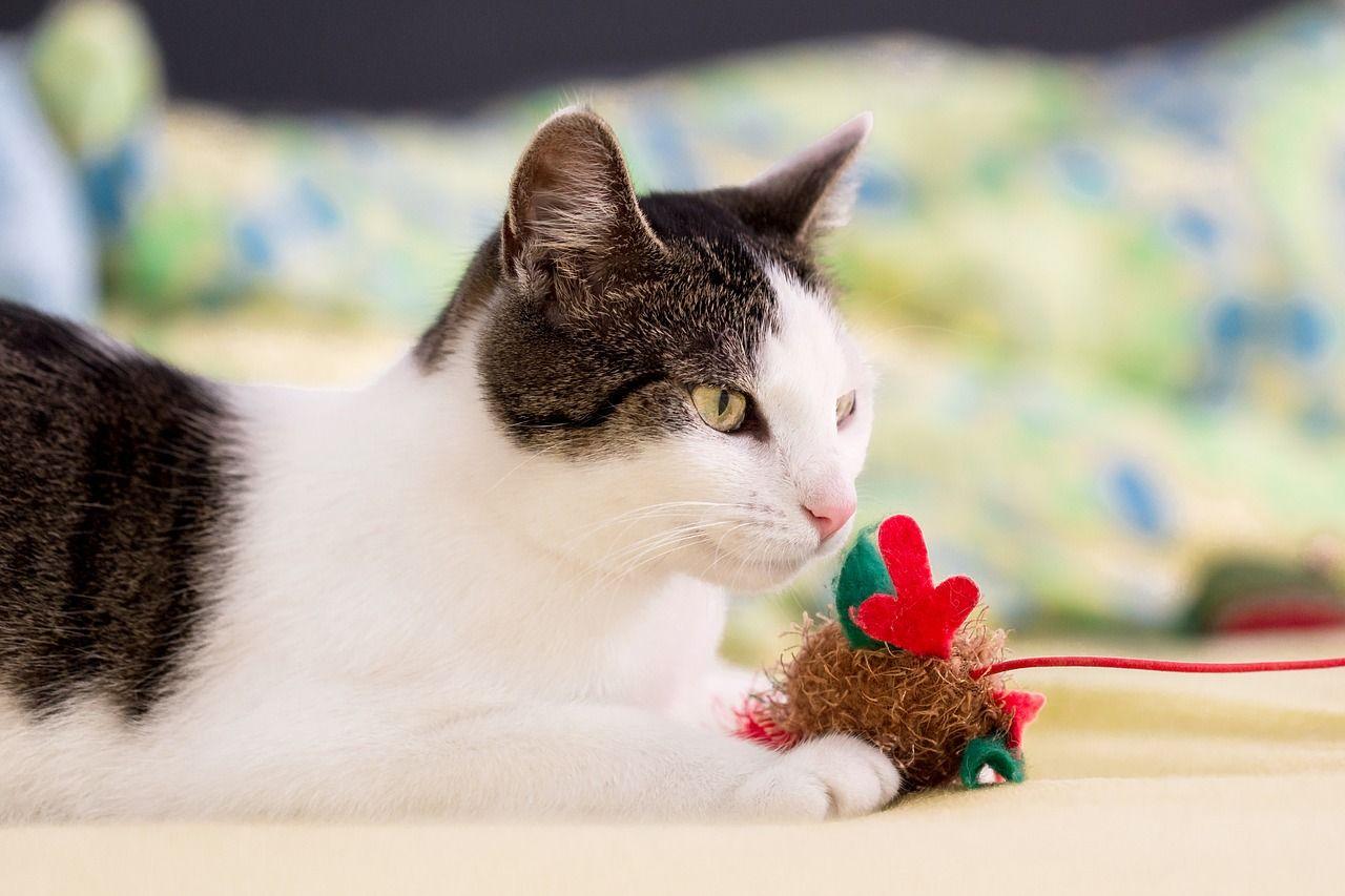 Czy warto zainwestować w perfumy dla kota
