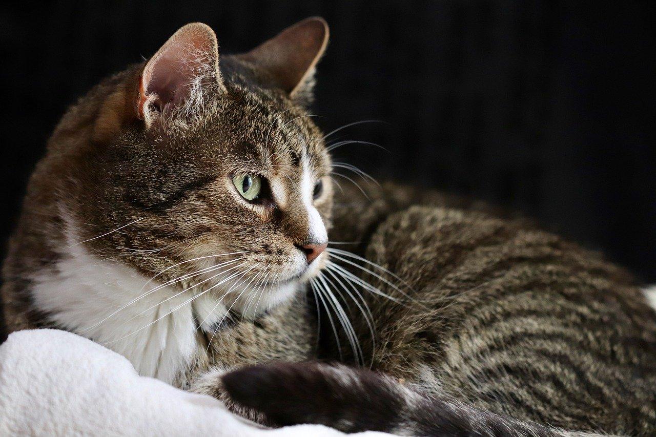 Jak zaspokoić potrzeby kota?