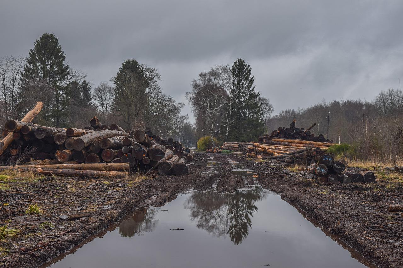 Wycinka drzew – jaki sprzęt powszechnie jest do tego używany
