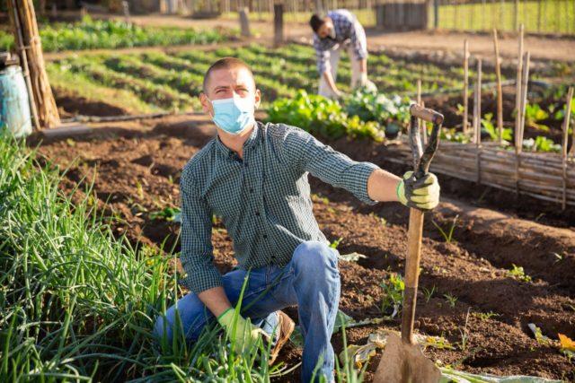 Jakiego typu nawozy wspomogą rozwój i wzrost naszych upraw?